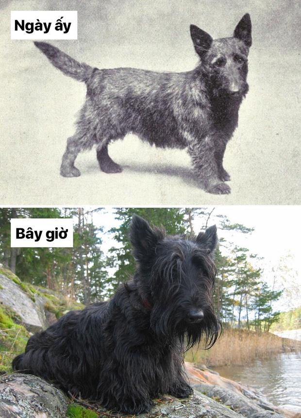 Sự thay đổi về ngoại hình của những chú chó cưng 100 năm trước và hiện tại sẽ khiến bạn bất ngờ đấy - Ảnh 3.