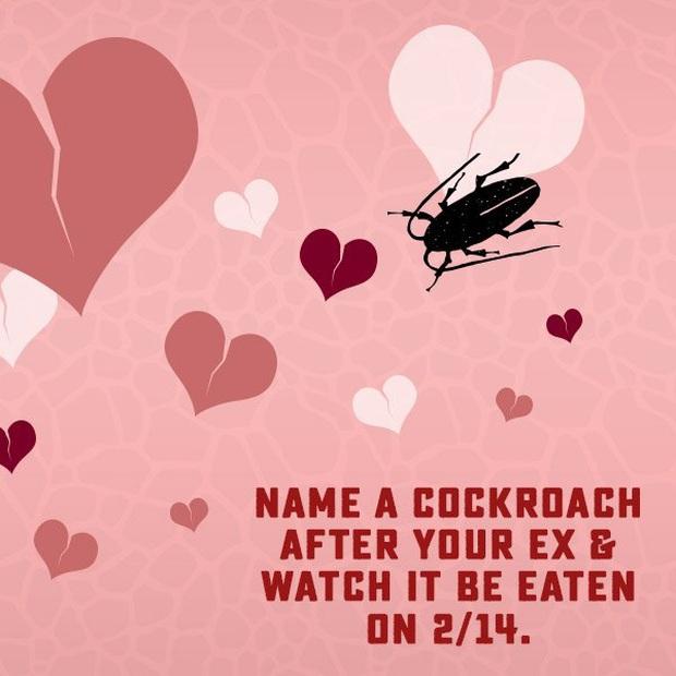 Dịch vụ đặc biệt cho những trái tim tan vỡ vào Valentine: Đặt tên người yêu cũ cho gián rồi để nó làm bữa tối của các con vật khác - Ảnh 1.