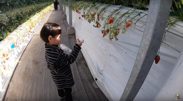 """Bất chấp quy định khắt khe của Youtube, bé Sa vẫn xuất hiện trong vlog mới của mẹ Quỳnh Trần, còn bập bẹ nói: """"Nhớ cô chú lắm"""" - Ảnh 6."""