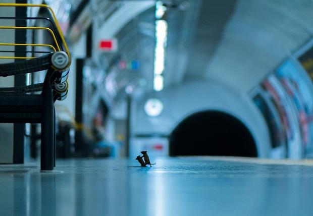 Bức ảnh hai chú chuột tí hon đánh nhau dưới ga tàu điện ngầm để giành giật thức ăn đoạt giải thưởng nhiếp ảnh của năm - Ảnh 1.