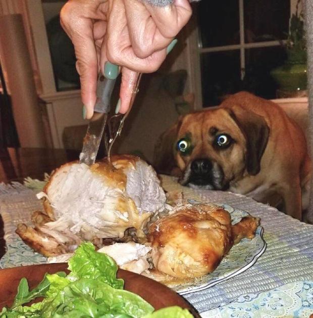 Ước gì có người nhìn tôi giống những chú chó này nhìn đồ ăn: tình yêu đích thực là như thế thôi! - Ảnh 1.
