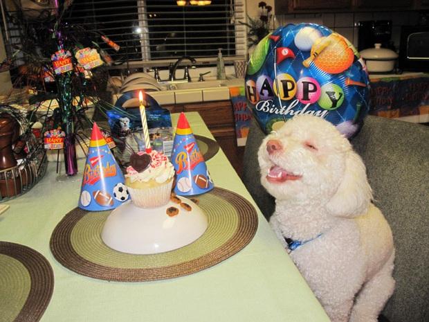 Ước gì có người nhìn tôi giống những chú chó này nhìn đồ ăn: tình yêu đích thực là như thế thôi! - Ảnh 5.
