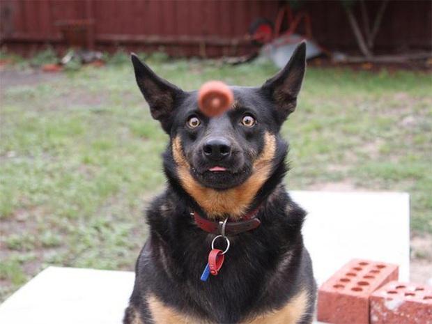 Ước gì có người nhìn tôi giống những chú chó này nhìn đồ ăn: tình yêu đích thực là như thế thôi! - Ảnh 7.