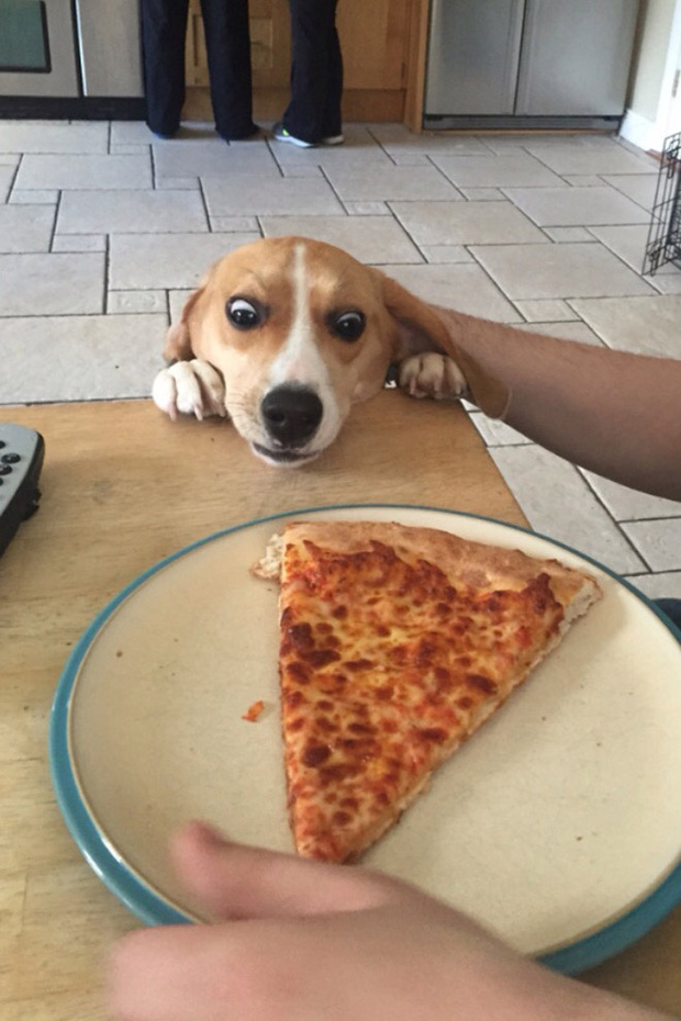 Ước gì có người nhìn tôi giống những chú chó này nhìn đồ ăn: tình yêu đích thực là như thế thôi! - Ảnh 10.