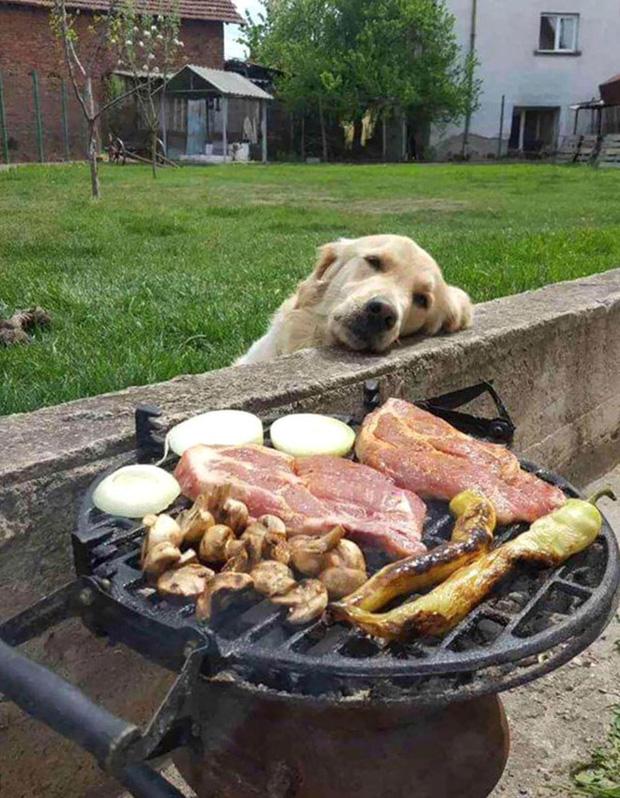 Ước gì có người nhìn tôi giống những chú chó này nhìn đồ ăn: tình yêu đích thực là như thế thôi! - Ảnh 11.