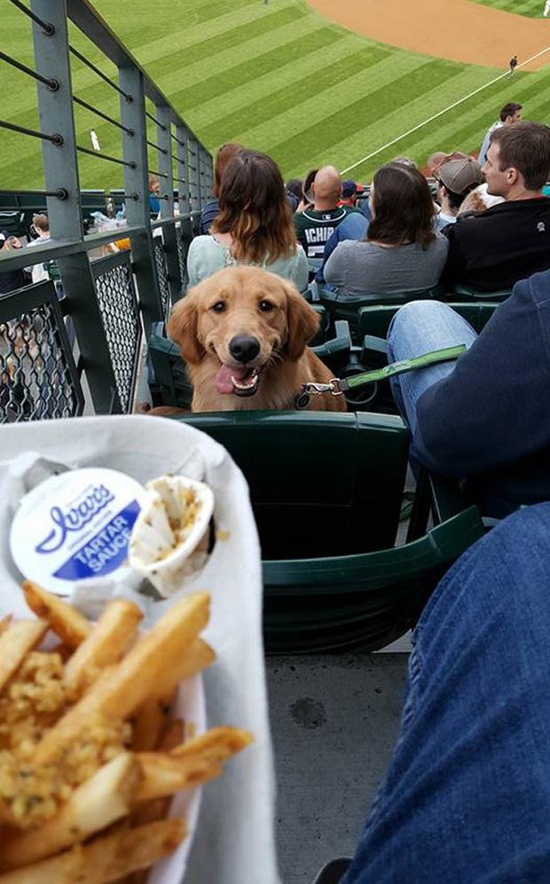 Ước gì có người nhìn tôi giống những chú chó này nhìn đồ ăn: tình yêu đích thực là như thế thôi! - Ảnh 13.