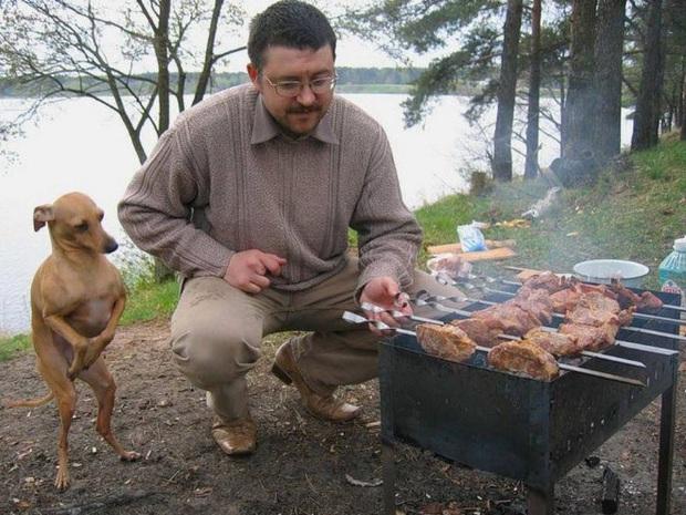 Ước gì có người nhìn tôi giống những chú chó này nhìn đồ ăn: tình yêu đích thực là như thế thôi! - Ảnh 15.