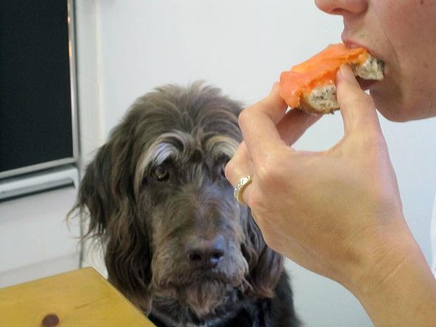 Ước gì có người nhìn tôi giống những chú chó này nhìn đồ ăn: tình yêu đích thực là như thế thôi! - Ảnh 17.