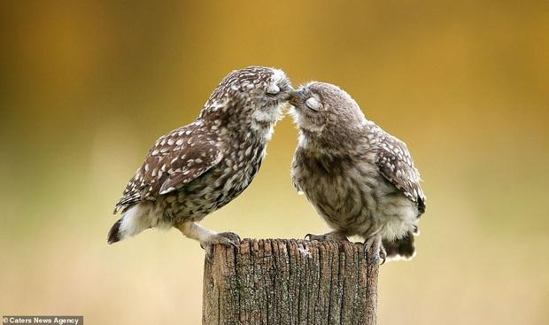 Đem tình yêu rải khắp thế gian trong ngày lễ tình nhân với chùm ảnh động vật âu yếm nhau cực tình tứ và siêu đáng yêu - Ảnh 5.