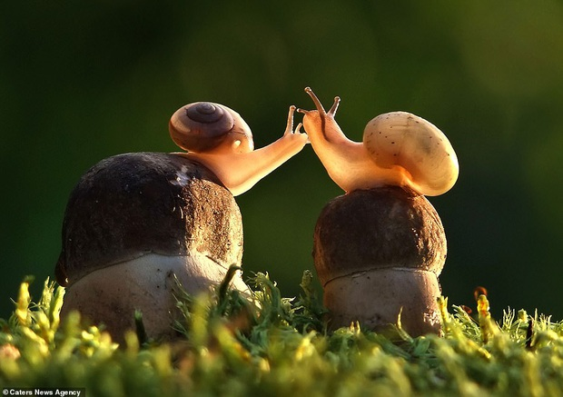 Đem tình yêu rải khắp thế gian trong ngày lễ tình nhân với chùm ảnh động vật âu yếm nhau cực tình tứ và siêu đáng yêu - Ảnh 7.