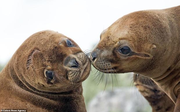 Đem tình yêu rải khắp thế gian trong ngày lễ tình nhân với chùm ảnh động vật âu yếm nhau cực tình tứ và siêu đáng yêu - Ảnh 10.