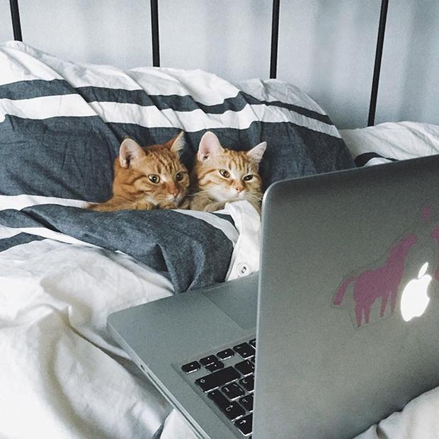 Đem tình yêu rải khắp thế gian trong ngày lễ tình nhân với chùm ảnh động vật âu yếm nhau cực tình tứ và siêu đáng yêu - Ảnh 12.