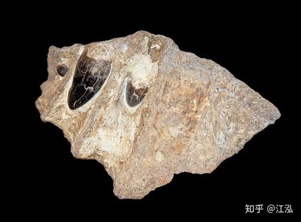 Cá sấu cổ đại: Cỗ máy hủy diệt còn đáng sợ hơn cả khủng long - Ảnh 3.