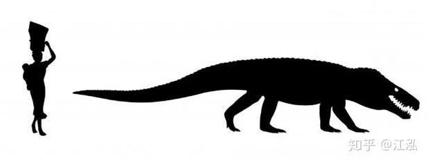 Cá sấu cổ đại: Cỗ máy hủy diệt còn đáng sợ hơn cả khủng long - Ảnh 8.