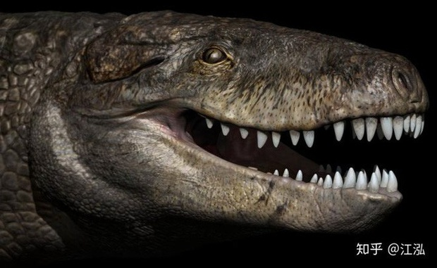 Cá sấu cổ đại: Cỗ máy hủy diệt còn đáng sợ hơn cả khủng long - Ảnh 9.