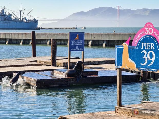 Chùm ảnh chụp San Francisco qua ống kính Galaxy S20 Ultra - Ảnh 6.