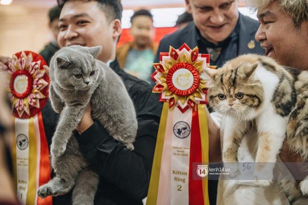 Đi thi mèo đẹp ở Hà Nội, các đại boss để lại loạt khoảnh khắc cưng không đỡ nổi: Chảnh mèo là có thật! - Ảnh 5.