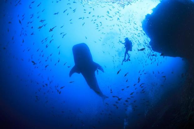 10 địa điểm lặn biển đẹp nhất thế giới vừa được tạp chí Forbes bình chọn, Việt Nam có 1 cái tên bất ngờ lọt vào danh sách này - Ảnh 23.
