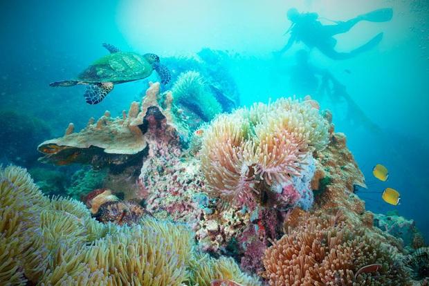 10 địa điểm lặn biển đẹp nhất thế giới vừa được tạp chí Forbes bình chọn, Việt Nam có 1 cái tên bất ngờ lọt vào danh sách này - Ảnh 24.