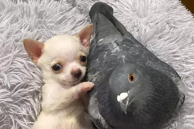 Chó không thể đi và chim bồ câu không thể bay, hai con vật đồng cảnh ngộ cùng nhau chia sẻ tình bạn ấm áp tại trung tâm cứu hộ - Ảnh 1.