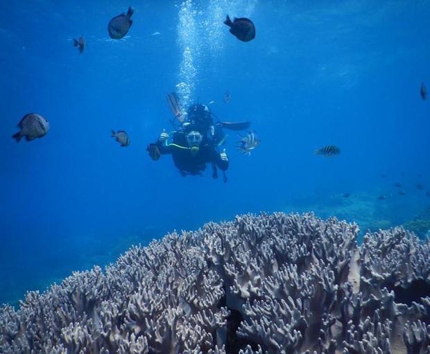 10 địa điểm lặn biển đẹp nhất thế giới vừa được tạp chí Forbes bình chọn, Việt Nam có 1 cái tên bất ngờ lọt vào danh sách này - Ảnh 14.