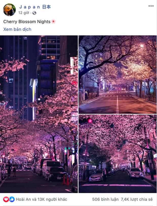"""Đất nước """"đẹp bất chấp thời gian"""" đích thị là Nhật Bản, xem ảnh hoa anh đào nở rộ về đêm mà chỉ biết ngỡ ngàng vì quá ảo! - Ảnh 1."""
