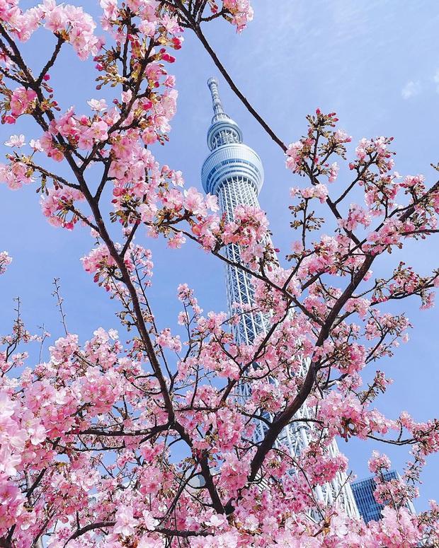 """Đất nước """"đẹp bất chấp thời gian"""" đích thị là Nhật Bản, xem ảnh hoa anh đào nở rộ về đêm mà chỉ biết ngỡ ngàng vì quá ảo! - Ảnh 19."""