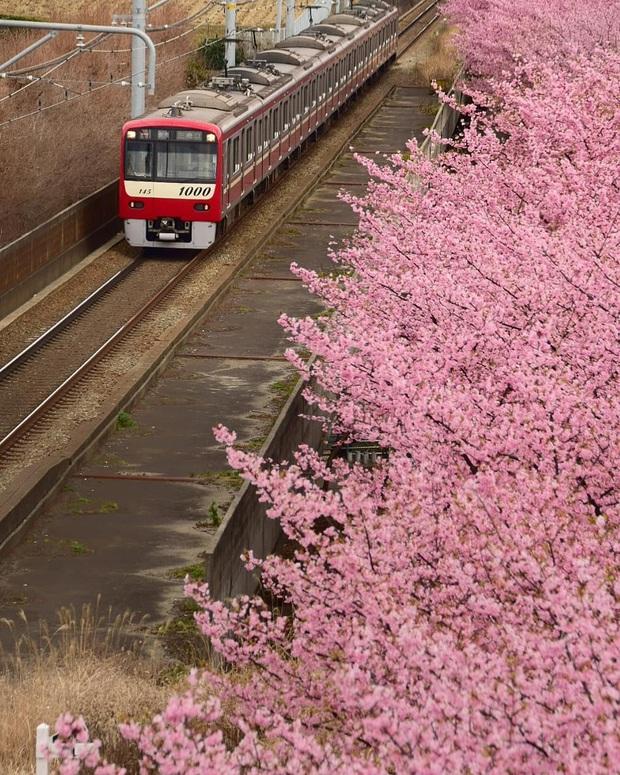 """Đất nước """"đẹp bất chấp thời gian"""" đích thị là Nhật Bản, xem ảnh hoa anh đào nở rộ về đêm mà chỉ biết ngỡ ngàng vì quá ảo! - Ảnh 26."""