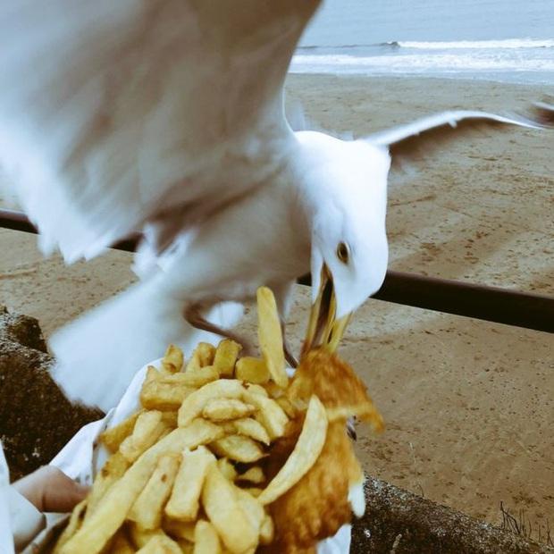Những bức ảnh chứng minh đám mòng biển chính là những tên cướp đồ ăn táo tợn nhất - Ảnh 15.