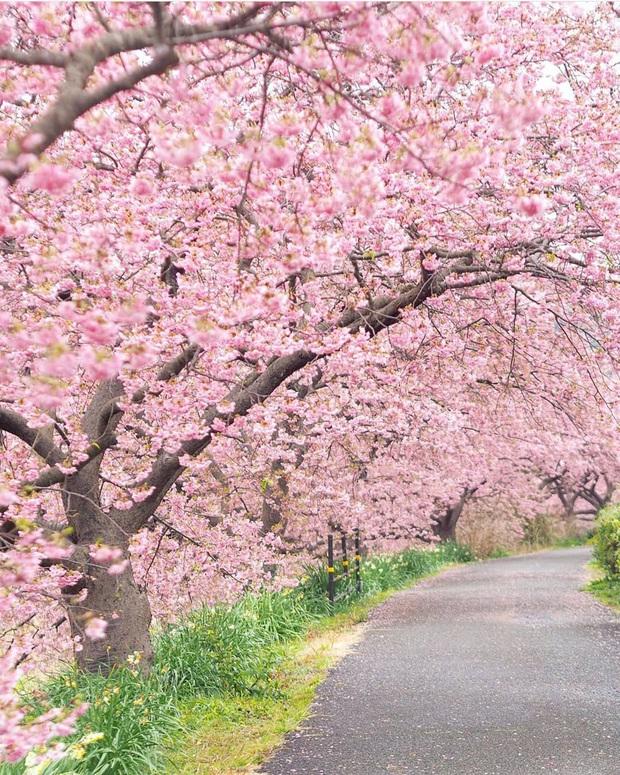 """Đất nước """"đẹp bất chấp thời gian"""" đích thị là Nhật Bản, xem ảnh hoa anh đào nở rộ về đêm mà chỉ biết ngỡ ngàng vì quá ảo! - Ảnh 6."""