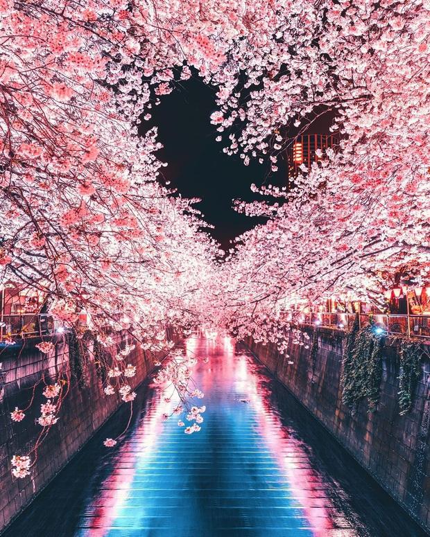 """Đất nước """"đẹp bất chấp thời gian"""" đích thị là Nhật Bản, xem ảnh hoa anh đào nở rộ về đêm mà chỉ biết ngỡ ngàng vì quá ảo! - Ảnh 11."""