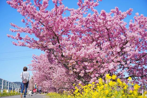 """Đất nước """"đẹp bất chấp thời gian"""" đích thị là Nhật Bản, xem ảnh hoa anh đào nở rộ về đêm mà chỉ biết ngỡ ngàng vì quá ảo! - Ảnh 18."""