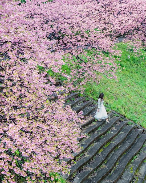 """Đất nước """"đẹp bất chấp thời gian"""" đích thị là Nhật Bản, xem ảnh hoa anh đào nở rộ về đêm mà chỉ biết ngỡ ngàng vì quá ảo! - Ảnh 4."""