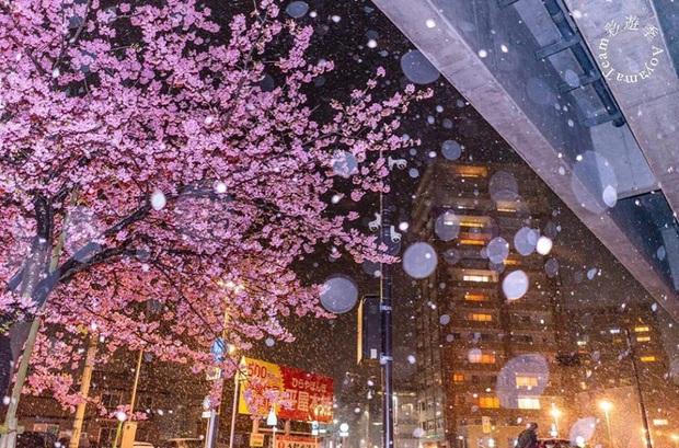 """Đất nước """"đẹp bất chấp thời gian"""" đích thị là Nhật Bản, xem ảnh hoa anh đào nở rộ về đêm mà chỉ biết ngỡ ngàng vì quá ảo! - Ảnh 12."""