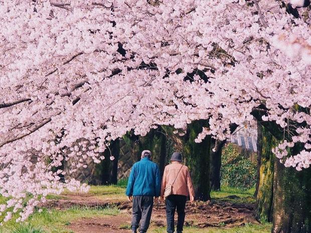 """Đất nước """"đẹp bất chấp thời gian"""" đích thị là Nhật Bản, xem ảnh hoa anh đào nở rộ về đêm mà chỉ biết ngỡ ngàng vì quá ảo! - Ảnh 25."""