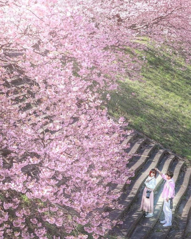 """Đất nước """"đẹp bất chấp thời gian"""" đích thị là Nhật Bản, xem ảnh hoa anh đào nở rộ về đêm mà chỉ biết ngỡ ngàng vì quá ảo! - Ảnh 24."""