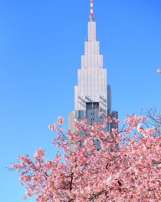 """Đất nước """"đẹp bất chấp thời gian"""" đích thị là Nhật Bản, xem ảnh hoa anh đào nở rộ về đêm mà chỉ biết ngỡ ngàng vì quá ảo! - Ảnh 23."""
