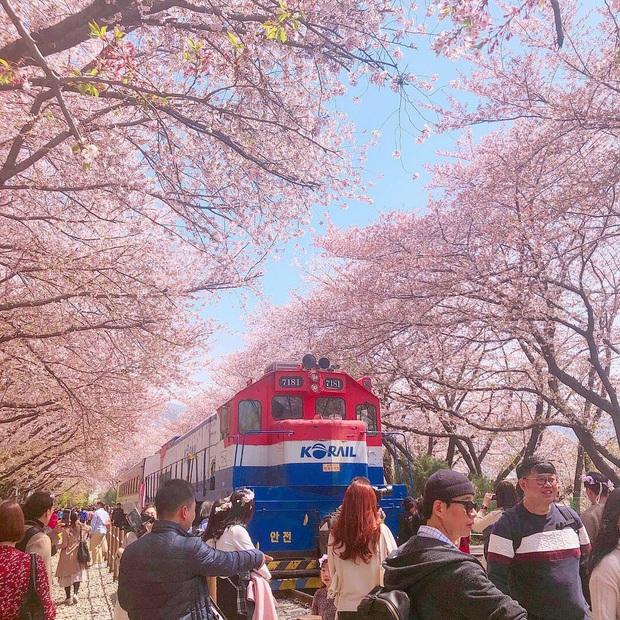 """Đất nước """"đẹp bất chấp thời gian"""" đích thị là Nhật Bản, xem ảnh hoa anh đào nở rộ về đêm mà chỉ biết ngỡ ngàng vì quá ảo! - Ảnh 17."""