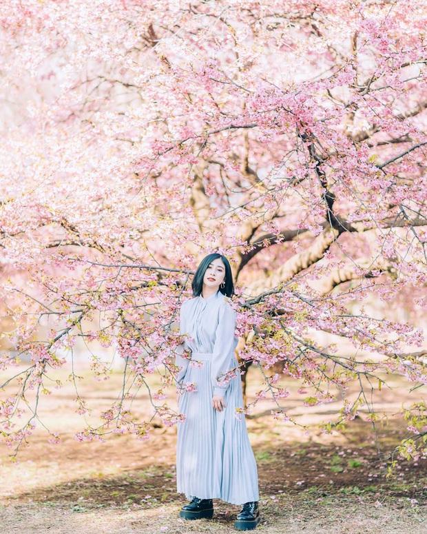 """Đất nước """"đẹp bất chấp thời gian"""" đích thị là Nhật Bản, xem ảnh hoa anh đào nở rộ về đêm mà chỉ biết ngỡ ngàng vì quá ảo! - Ảnh 22."""