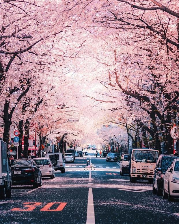"""Đất nước """"đẹp bất chấp thời gian"""" đích thị là Nhật Bản, xem ảnh hoa anh đào nở rộ về đêm mà chỉ biết ngỡ ngàng vì quá ảo! - Ảnh 3."""