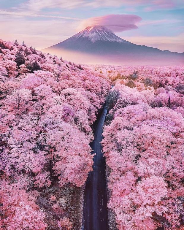 """Đất nước """"đẹp bất chấp thời gian"""" đích thị là Nhật Bản, xem ảnh hoa anh đào nở rộ về đêm mà chỉ biết ngỡ ngàng vì quá ảo! - Ảnh 2."""