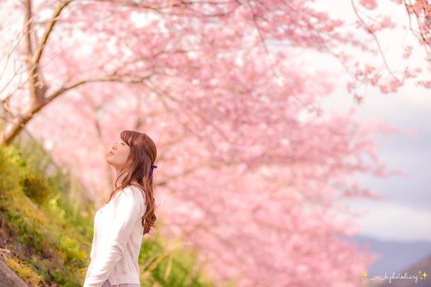 """Đất nước """"đẹp bất chấp thời gian"""" đích thị là Nhật Bản, xem ảnh hoa anh đào nở rộ về đêm mà chỉ biết ngỡ ngàng vì quá ảo! - Ảnh 20."""