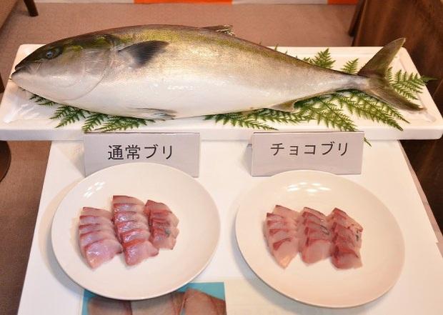 Nhật Bản ra mắt sushi cá cam phiên bản cực lạ: kết hợp với quýt và chocolate, chưa biết có ngon hay không nhưng ai cũng tò mò muốn thử - Ảnh 3.