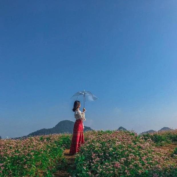 Xứ sở 4 mùa hoa là xưa rồi nhé, Mộc Châu nay là xứ sở của 12 mùa hoa, mỗi tháng đều có vẻ đẹp riêng đến phát cuồng - Ảnh 14.