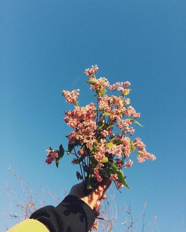 Xứ sở 4 mùa hoa là xưa rồi nhé, Mộc Châu nay là xứ sở của 12 mùa hoa, mỗi tháng đều có vẻ đẹp riêng đến phát cuồng - Ảnh 15.