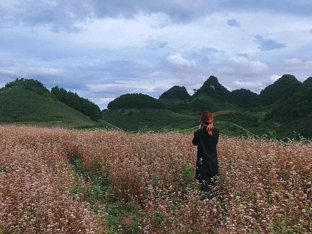 Xứ sở 4 mùa hoa là xưa rồi nhé, Mộc Châu nay là xứ sở của 12 mùa hoa, mỗi tháng đều có vẻ đẹp riêng đến phát cuồng - Ảnh 16.