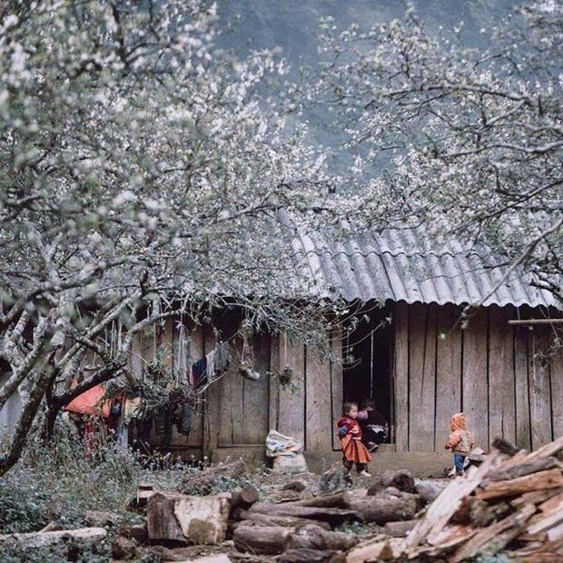 Xứ sở 4 mùa hoa là xưa rồi nhé, Mộc Châu nay là xứ sở của 12 mùa hoa, mỗi tháng đều có vẻ đẹp riêng đến phát cuồng - Ảnh 5.