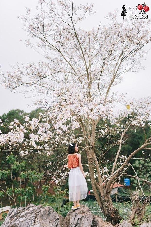 Xứ sở 4 mùa hoa là xưa rồi nhé, Mộc Châu nay là xứ sở của 12 mùa hoa, mỗi tháng đều có vẻ đẹp riêng đến phát cuồng - Ảnh 8.