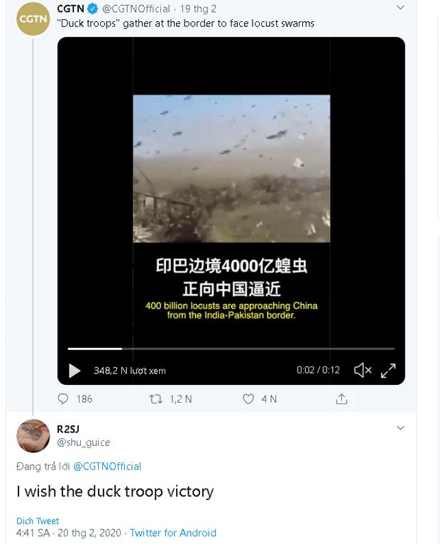 """Trung Quốc cử """"đội quân"""" 10 vạn con vịt đến biên giới để tiêu diệt 400 tỷ con châu chấu - Ảnh 3."""