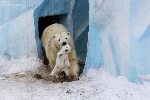 """24 khoảnh khắc ngọt ngào """"đốn tim"""" về tình mẫu tử của động vật hoang dã Photo-1-1582269388336694405258"""